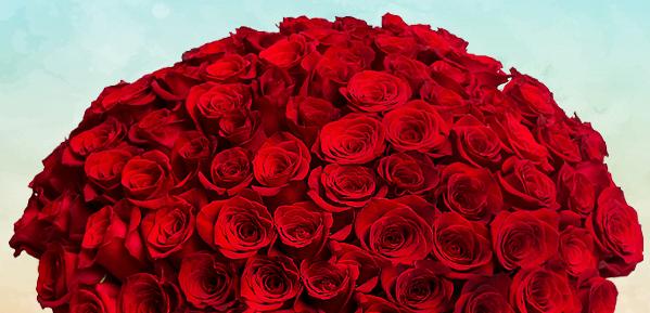 Роза ставрополь недорогие цветы в москве адреса